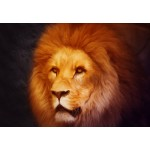 Puzzle  Grafika-Kids-00951 Lion