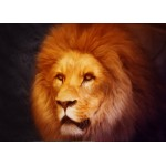 Puzzle  Grafika-Kids-00953 Magnetic Pieces - Lion
