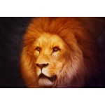 Puzzle  Grafika-Kids-00954 XXL Pieces - Lion