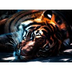 Puzzle  Grafika-Kids-00961 Tiger