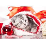 Puzzle  Grafika-Kids-01129 Magnetic Pieces - Christmas Kitten