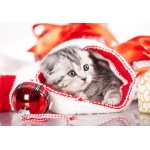 Puzzle  Grafika-Kids-01131 XXL Pieces - Christmas Kitten