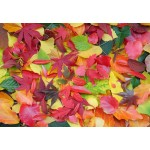 Puzzle  Grafika-Kids-01162 Autumn Leaves