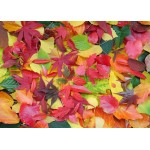 Puzzle  Grafika-Kids-01163 Magnetic Pieces - Autumn Leaves