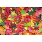 Puzzle  Grafika-Kids-01165 XXL Pieces - Autumn Leaves