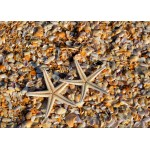 Puzzle  Grafika-Kids-01232 Magnetic Pieces - Shells and Starfish