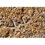 Puzzle  Grafika-Kids-01234 XXL Pieces - Shells and Starfish