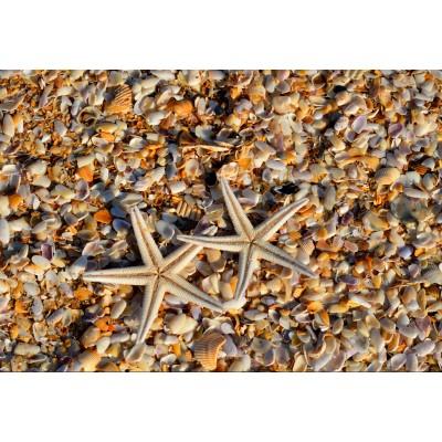 Puzzle Grafika-Kids-01234 XXL Pieces - Shells and Starfish
