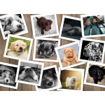 Puzzle  Grafika-Kids-01613 Dogs