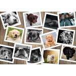 Puzzle  Grafika-Kids-01614 Dogs