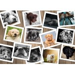 Puzzle  Grafika-Kids-01615 Magnetic Pieces - Dogs
