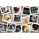 Puzzle  Grafika-Kids-01617 XXL Pieces - Dogs