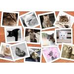 Puzzle  Grafika-Kids-01619 Cats