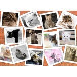 Puzzle  Grafika-Kids-01620 Magnetic Pieces - Cats