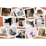 Puzzle  Grafika-Kids-01622 XXL Pieces - Cats