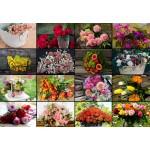 Puzzle  Grafika-Kids-01939 Collage - Flowers