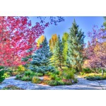 Puzzle  Grafika-Kids-02054 Colorful Forest, Colorado, USA