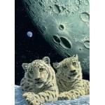Puzzle   Magnetic Pieces - Schim Schimmel - Lair of the Snow Leopard