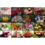 Puzzle   XXL Pieces - Collage - Flowers