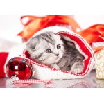 Puzzle  Grafika-01051 Christmas Kitten