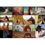 Puzzle  Grafika-01213 Collage - Horses