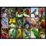 Puzzle  Grafika-01223 Collage - World's Most Beautiful Birds