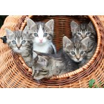 Puzzle  Grafika-01237 Kittens in a Basket