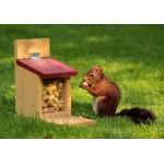 Puzzle  Grafika-01272 Squirrel