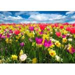 Puzzle  Grafika-01279 Tulips