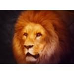 Puzzle  Grafika-01485 Lion