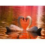 Puzzle  Grafika-01551 Swans