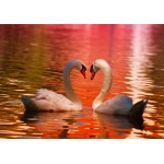 Puzzle  Grafika-01553 Swans