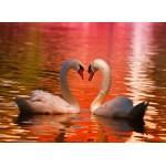 Puzzle  Grafika-01554 Swans