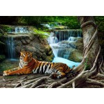 Puzzle  Grafika-01559 Tiger