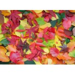 Puzzle  Grafika-01634 Autumn Leaves