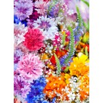 Puzzle  Grafika-01638 Flower Blast