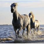 Puzzle  Grafika-01692 Horses