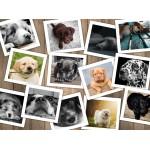 Puzzle  Grafika-02210 Dogs