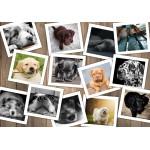 Puzzle  Grafika-02211 Dogs