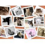 Puzzle  Grafika-02212 Cats