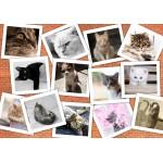 Puzzle  Grafika-02213 Cats
