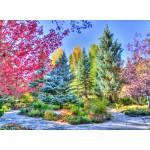 Puzzle  Grafika-02818 Colorful Forest, Colorado, USA