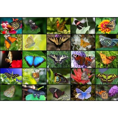 Puzzle Grafika-T-00046 Collage - Butterflies