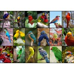Puzzle  Grafika-T-00047 Collage - World's Most Beautiful Birds