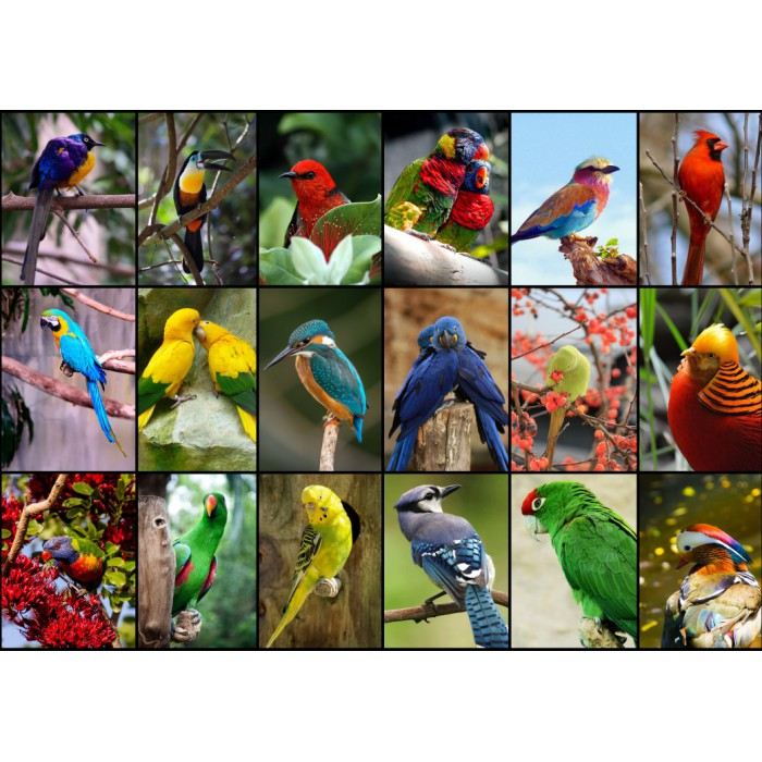 Collage - World's Most Beautiful Birds