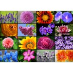 Puzzle  Grafika-T-00056 Collage - Spring Flowers