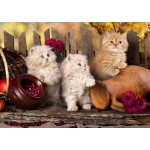 Puzzle  Grafika-T-00089 Persian Cats