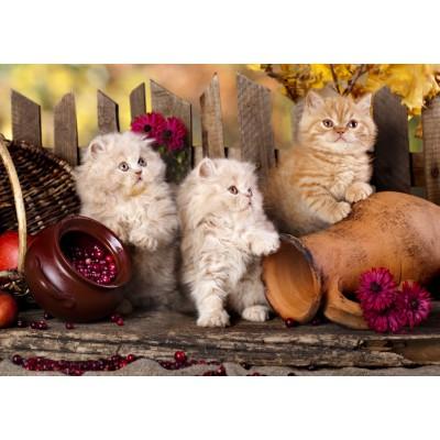 Puzzle Grafika-T-00089 Persian Cats