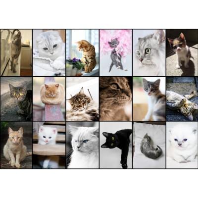 Puzzle Grafika-T-00100 Collage - Cats