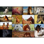 Puzzle  Grafika-T-00102 Collage - Horses